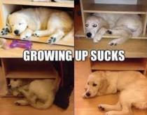 growing up sucks image